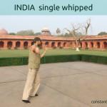 INDIA single whipped