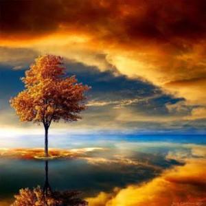 lone tree under cloud