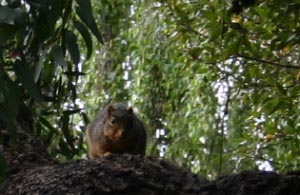 Tai Chi fan squirrel