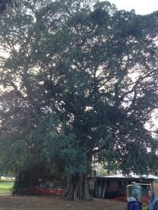 tree 612X816